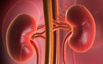 Лечение увеличенной почки: причины и симптоматика заболевания