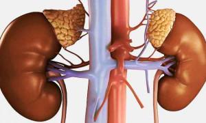 Классификация образований на надпочечнике, причины, симптомы и лечение