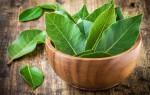 Лечение цистита лавровым листом — миф или действующий метод