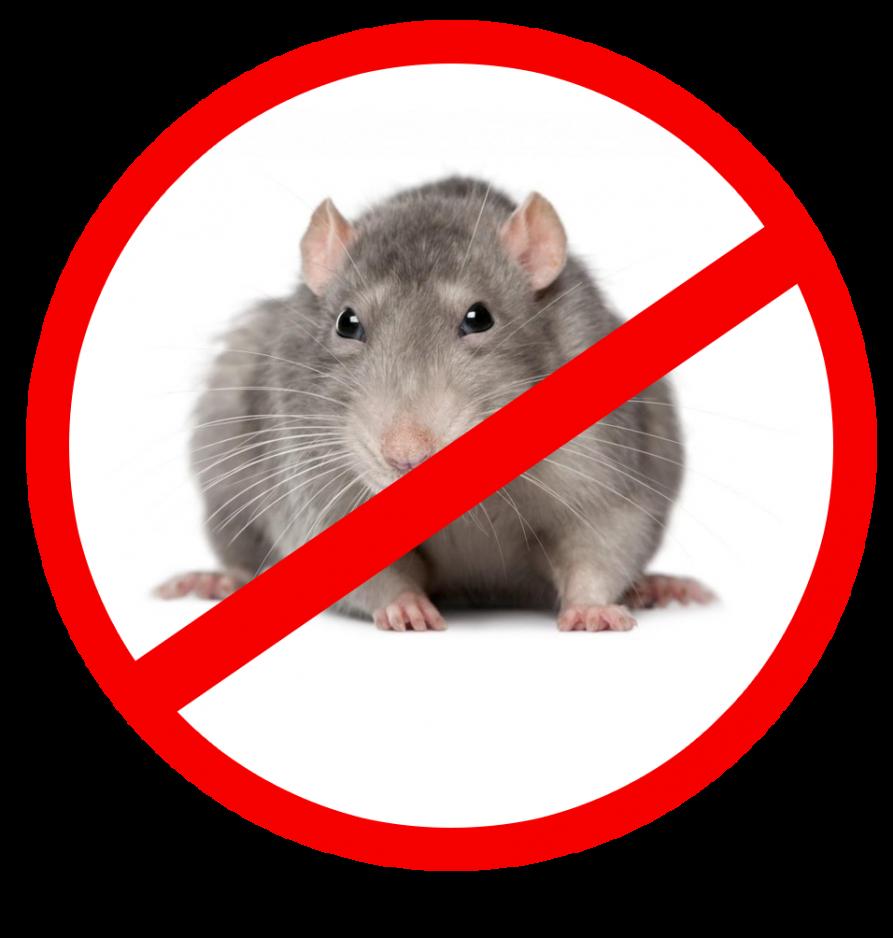 перечеркнутая крыса