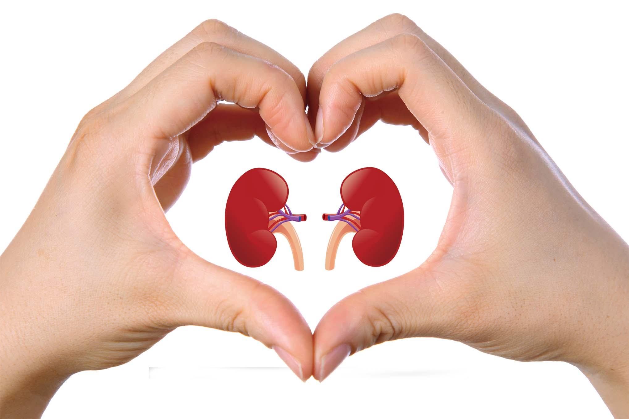 почки в символе сердца