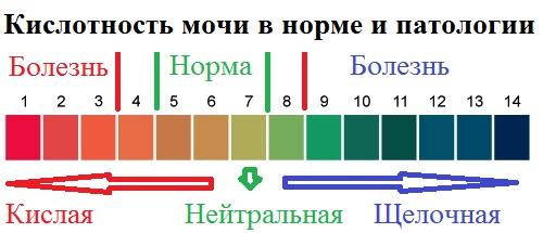 кислотность мочи