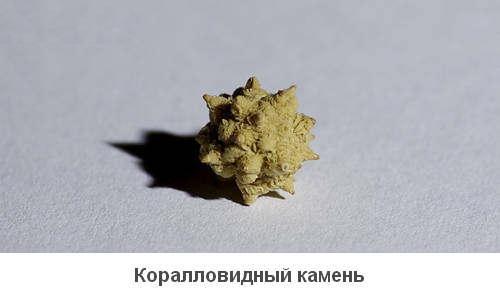 Коралловидный камень