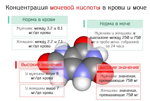 Норма мочевой кислоты в моче и крови