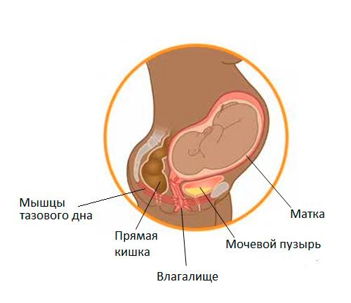 беременность и мочевой пузырь