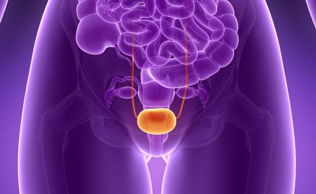 что может давить на мочевой пузырь - схема