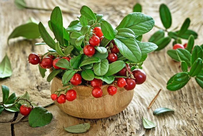 Брусничные листья и ягоды