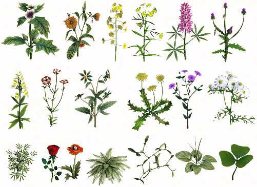 лекартственные травы