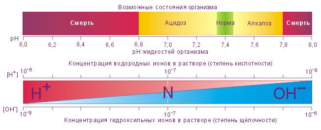 шкала рН жидкости в организме