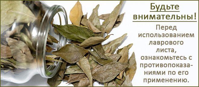 Эффективно ли лечение цистита лавровым листом
