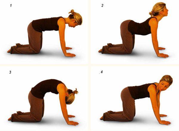 упражнение кошачья спинка