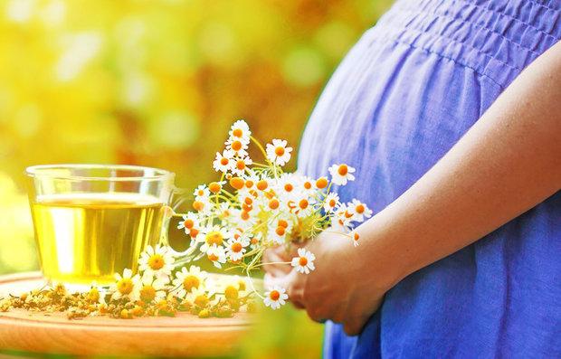 ромашка и беременность
