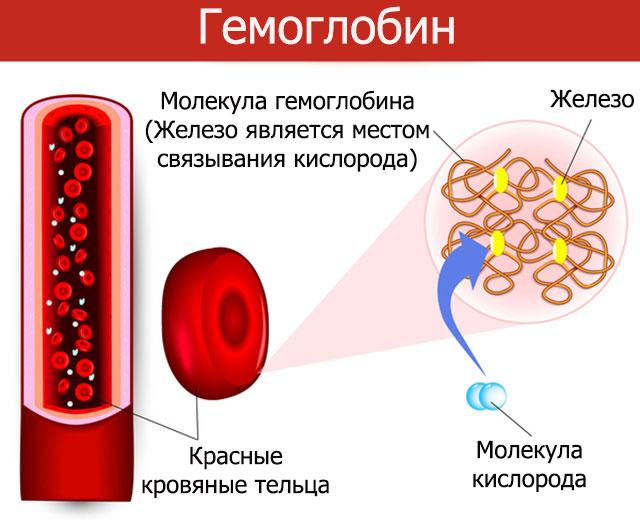 гемоглобин это