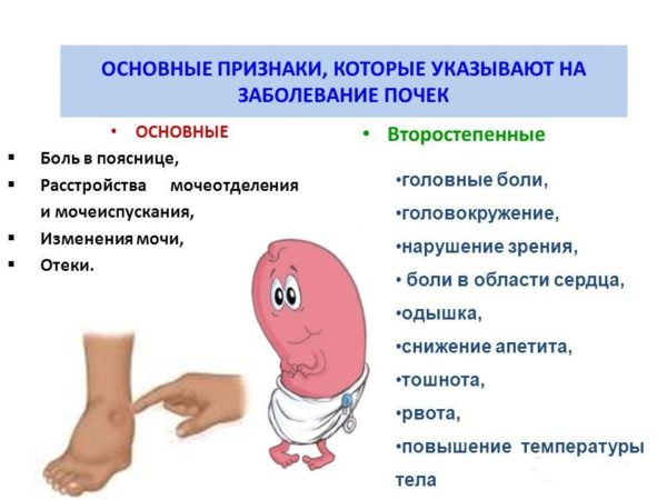 признаки болезней почек