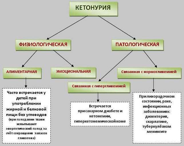 виды кетонурии и ее причины