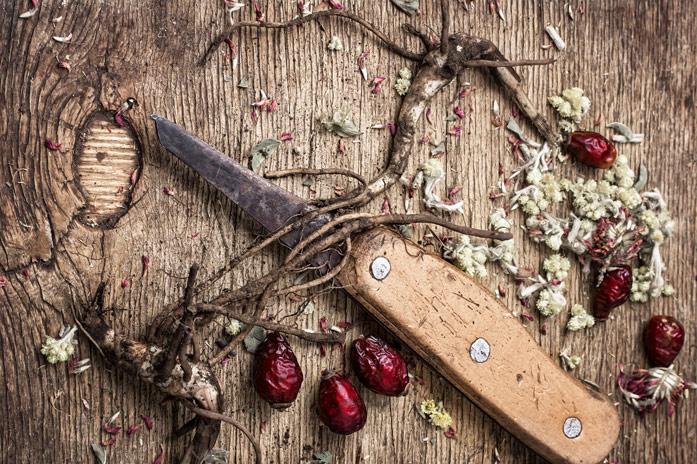 корни шиповника и нож