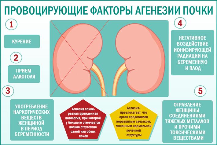 провоцирующие факторы агенезии почки