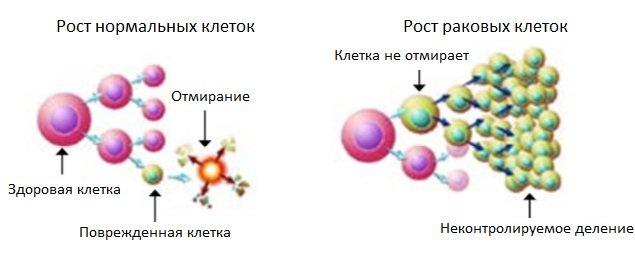 деление раковых клеток