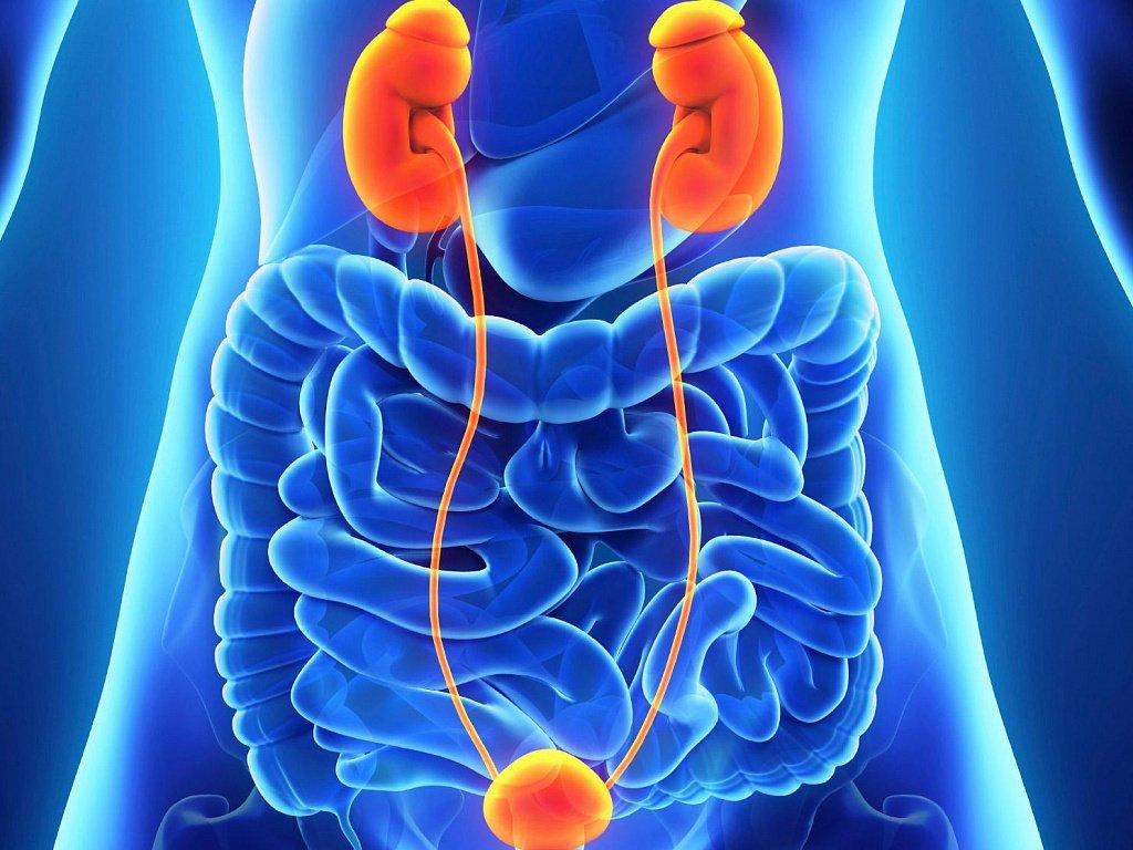Что такое уросепсис: этиология заболевания, симптомы, лечение и перспективы выздоровления